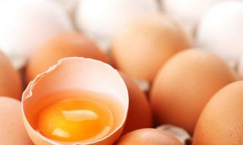clara-y-yema-de-huevo-500x299