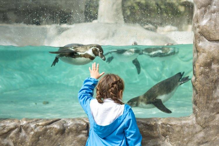 5 Cosas Que No Sabias De Zoo De Huachipa Once Upon A Mom Las torres s/n ate 3 перу. cosas que no sabias de zoo de huachipa
